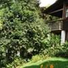 Rancho Olivier