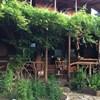 myra ağaç evler