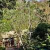 Cuffie River Nature Retreat