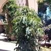Caesarea Garden Suite