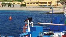 Azzolini Palm Beach