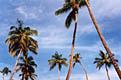 Путешествие по Богатому берегу - фотографии из Коста-Рики - Travel.ru