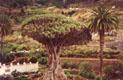 Остров вечной весны - фотографии из Испании - Travel.ru