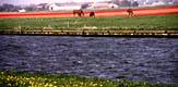 Бесконечность цветущих тюльпанов - фотографии из Нидерландов - Travel.ru