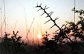 Африка для белых людей - фотографии из ЮАР - Travel.ru