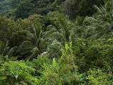 совершенно типичные заросли-джунгли / Фото из Доминиканской Республики