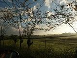 утро в саванне / Фото из Доминиканской Республики