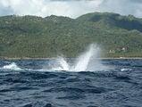 фонтанчик от кита / Фото из Доминиканской Республики