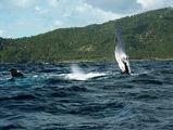 ласты кита / Фото из Доминиканской Республики