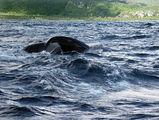 хвостик кита / Фото из Доминиканской Республики