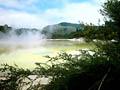 Киви в перьях - фотографии из Новой Зеландии - Travel.ru