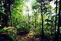 Соленые тропы Крокер-Рендж - фотографии из Малайзии - Travel.ru