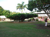 миндальное дерево на пляже / Тринидад и Тобаго