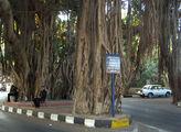 Полицейский пост  под деревом / Фото из Египта
