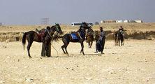 Араб дубасит коня / Фото из Египта