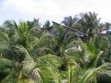 Домик в джунглях / Фото из Вьетнама
