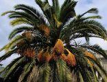 Там прекрасная пальма цветет... / Фото из Турции