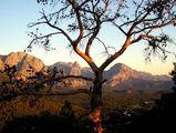 Сосна в лучах восходящего солнца / Фото из Турции