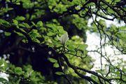 Белано. Дерево / Италия