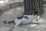 Кносская кошка / Фото из Греции