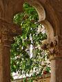Дубровник. Апельсиновое дерево во дворике францисканского монастыря / Фото из Хорватии