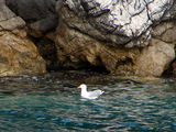 Чайка / Фото из Хорватии