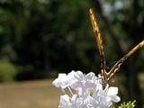 Бабочка крылышками бяк... / Фото из Аргентины