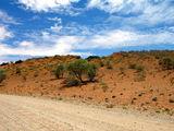 Дорога убегает в даль / Фото из ЮАР