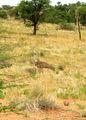 Птица секретарь / Фото из ЮАР