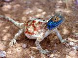 Маленький геккон / Фото из ЮАР