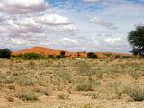 Саванна плавно переходит в пустыню / Фото из ЮАР