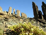Национальный парк Richtersveld / Фото из ЮАР