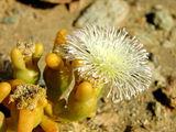 С уникальной растительностью / Фото из ЮАР