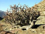 Только деревья / Фото из ЮАР
