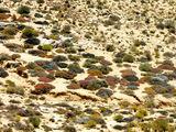 Палитра трав / Фото из ЮАР
