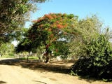 В апельсиновой ферме / Фото из ЮАР
