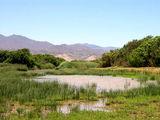 Очень засушливый год / Фото из ЮАР