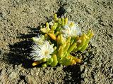 Снова травы / Фото из ЮАР