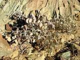"""Так растут маленькие """"монетки"""" / Фото из ЮАР"""
