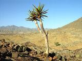 Маленькая пальма / Фото из ЮАР