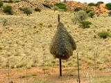 По дороге на запад / Фото из ЮАР