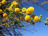 И редкая растительность / Фото из ЮАР