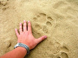 Здесь прогуливался лев / Фото из ЮАР