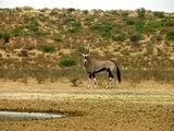 Антилопы / Фото из ЮАР