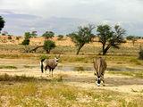Огромные антилопы / Фото из ЮАР