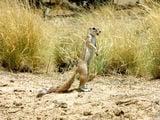 Вперед смотрящий / Фото из ЮАР