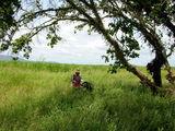 Поросшие бурьяном / Фото из Свазиленда