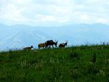 Пасущиеся антилопы / Фото из Свазиленда