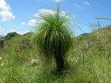 В парке / Фото из Свазиленда