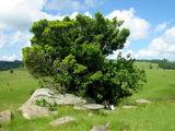 Плошадка для отдыха / Фото из Свазиленда